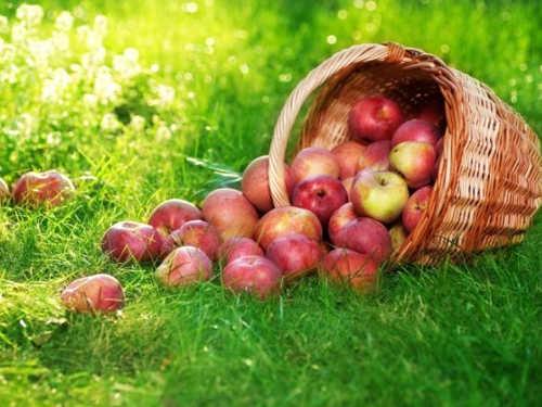 Яблочный Спас: народные традиции, обычаи иприметы