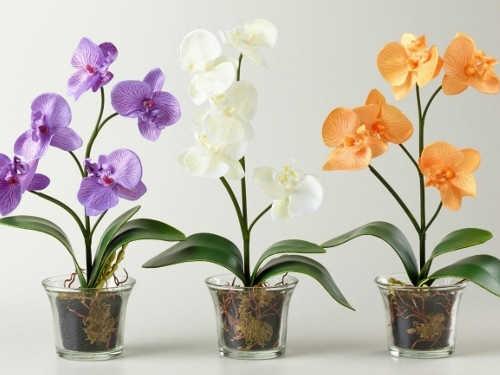 Орхидея вдоме: приметы исуеверия