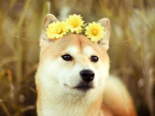 Значение Желтой Собаки— символа 2018 года