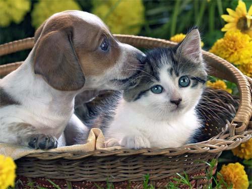 Фэн-шуй: влияние домашних животных наэнергетику вашей квартиры