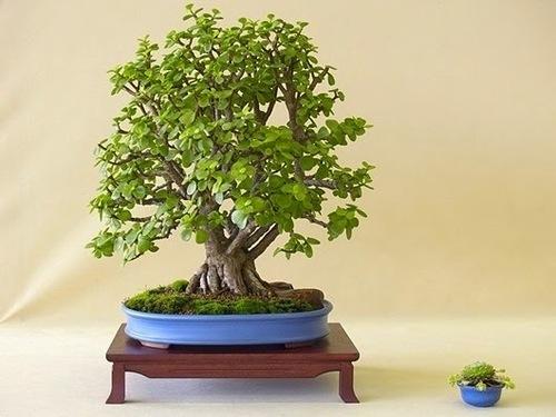 Заговоры наденежное дерево: нафинансовое благополучие иуспех вработе