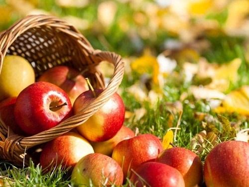 Яблочный Спас в2018году: народные приметы иобычаи праздника