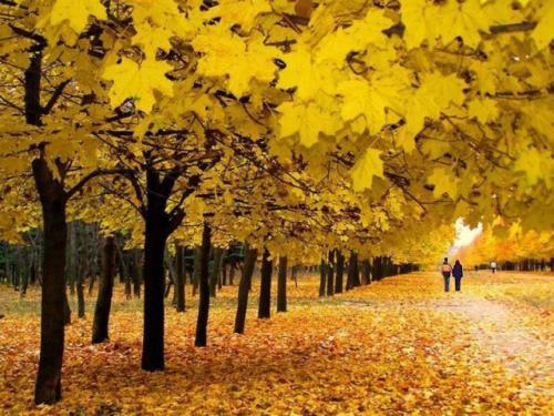 Что обязательно нужно сделать осенью 2018года: советы для каждого Знака Зодиака