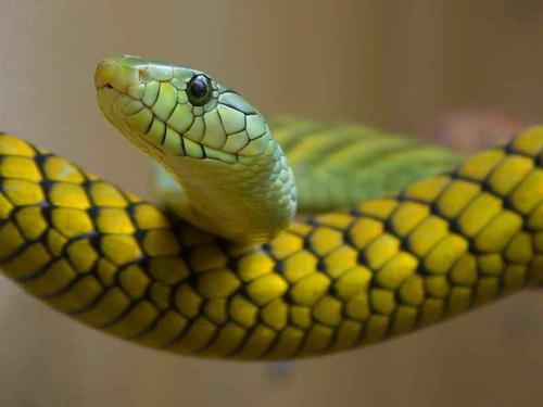 Кчему снятся змеи женщине имужчине