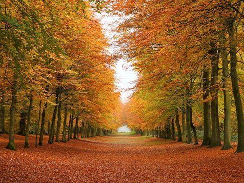 Осенние обряды наблагополучие, удачу иденьги