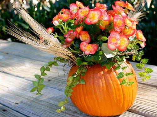 Лунный календарь комнатных растений наноябрь 2018 года
