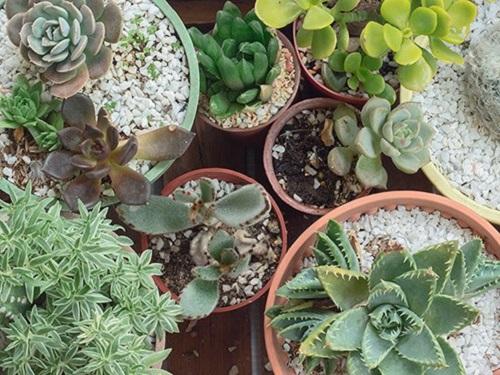 Лунный календарь комнатных растений надекабрь 2018 года