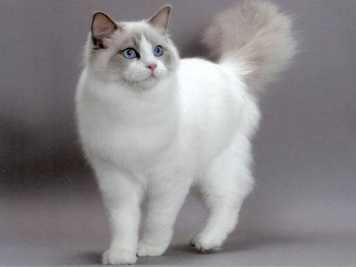 Приметы про кошек вдоме