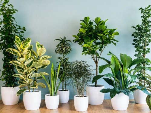 Лунный календарь комнатных растений нафевраль 2019 года