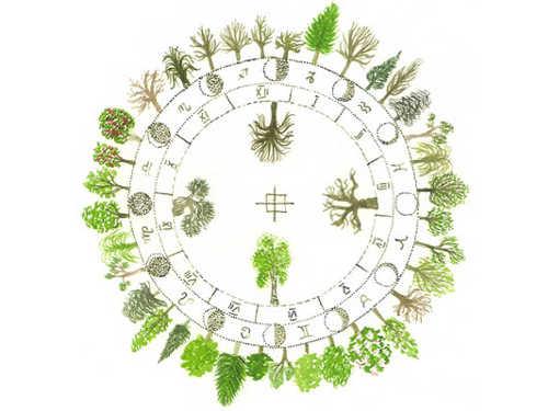 Гороскоп друидов по дате рождения на 2019 год — дерево и цветы ✨