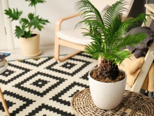 Лунный календарь комнатных растений намарт 2019 года