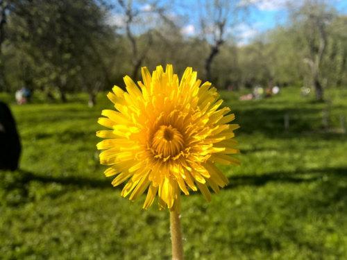 Как привлечь счастье иденьги вначале весны