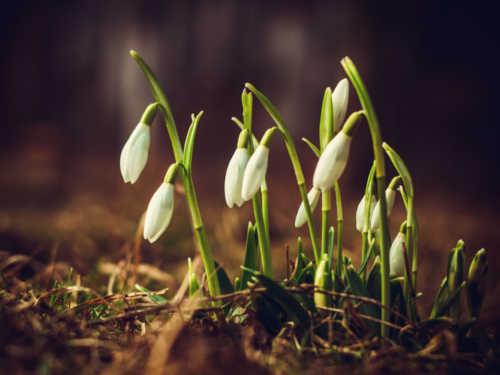 """Приметы весны: ранняя или поздняя весна в этом году"""""""