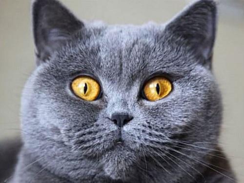 Какая кошка подходит вам поЗнаку Зодиака
