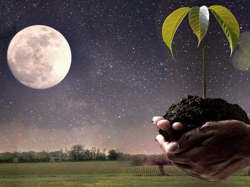"""Благоприятные дни для посадки и высадки растений в апреле 2019 года"""""""