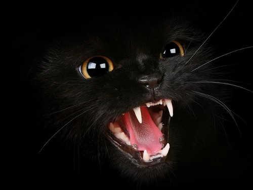 Почему нельзя долго смотреть кошке вглаза: приметы