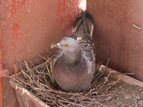 Птицы свили гнездо набалконе или уокна: приметы