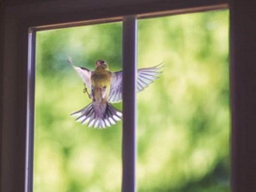 Птица ударилась вокно иулетела: приметы