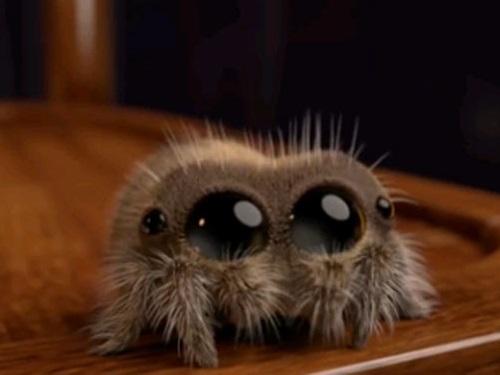 Почему нельзя убивать пауков вдоме: приметы