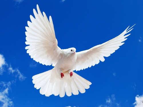 Заговоры иобряды наВознесение Господне