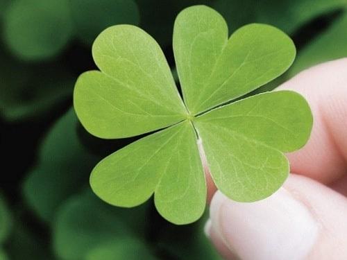 Насчастье: 5простых примет, которые помогут мгновенно привлечь удачу