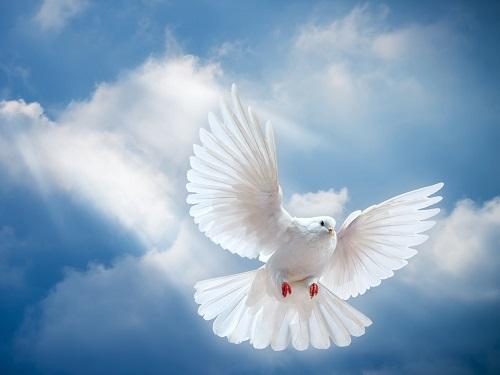 Духов день в 2019 году: обычаи и приметы