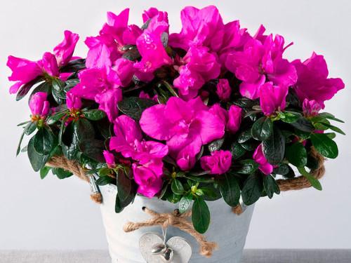 Можноли брать чужие комнатные цветы: приметы