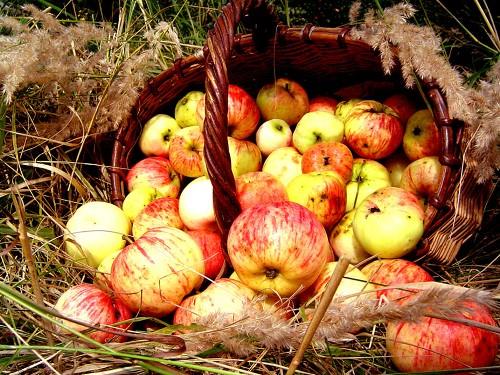 Яблочный Спас 19августа 2019года: обряды наденьги, любовь иисполнение желаний