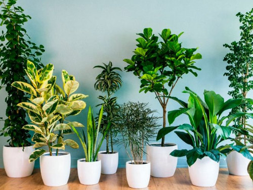Лунный календарь комнатных растений наавгуст 2019 года