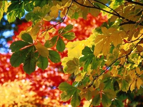 Семь дней до осени: как подготовиться к смене сезонов по Знаку Зодиака
