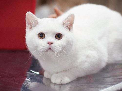 Значение цвета кошки: какие питомцы притягивают вдом деньги, счастье илюбовь