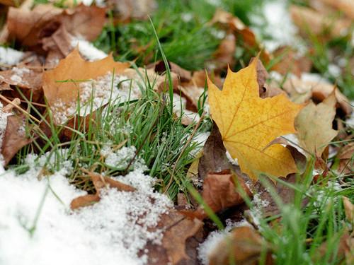 Народные приметы про первый снег