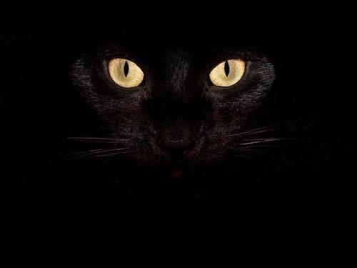 Черный кот вдоме: приметы