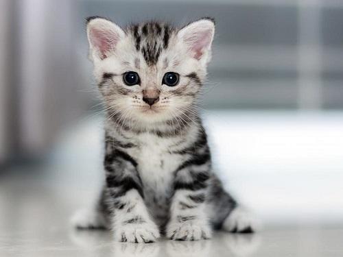 Как назвать кота, чтобы онприносил удачу