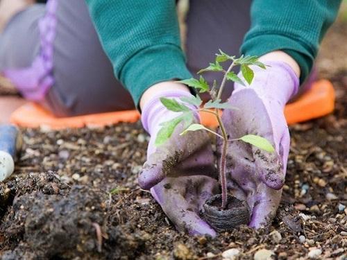 «Удачу— надачу!»: три полезных ипростых обряда наурожайный год