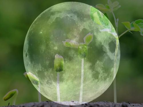 Астрология для садоводов: полезные советы для всходов, посевов, рассады иурожая