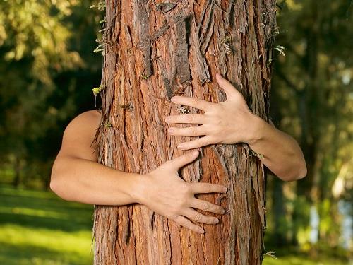 Деревья-талисманы: очем просить сосну ипочему полезно обнимать березу
