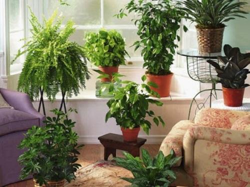 Лунный календарь комнатных растений наиюль 2020 года