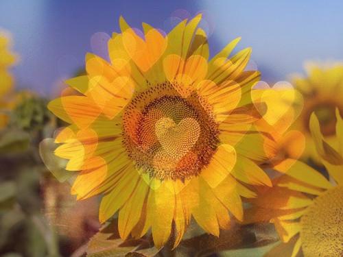 Любовный темперамент ивремя года: как любят люди, рожденные летом