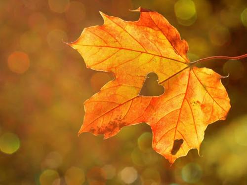 Любовный темперамент ивремя года: как любят люди, рожденные осенью