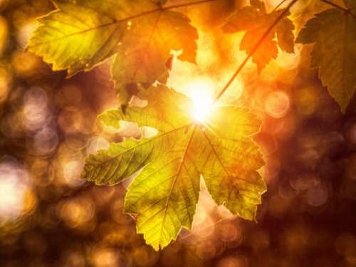 Осеннее равноденствие всентябре: что важно доделать изавершить кэтому дню в2020 году