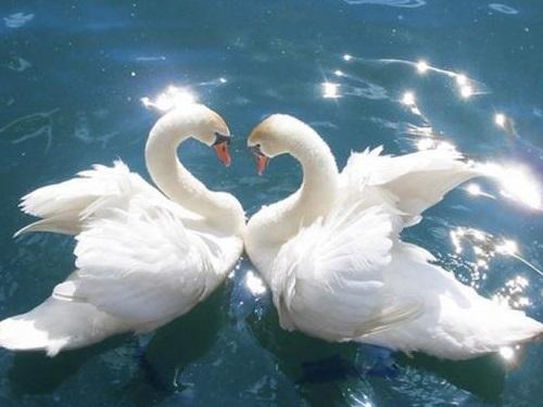 Бытовая магия: 7предметов, которые привлекают вдом любовь иукрепляют брак