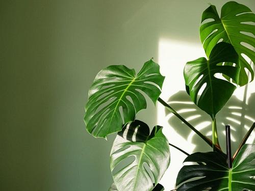 Лунный календарь комнатных растений наянварь 2021 года