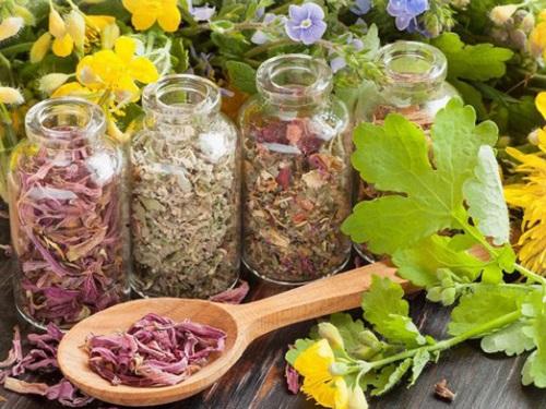 Растения-обереги: как ихиспользовать вповседневной жизни