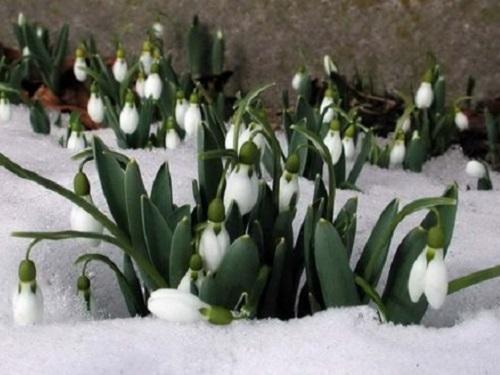 Обряды свесенним снегом: отпустить тревоги ипривлечь любовь
