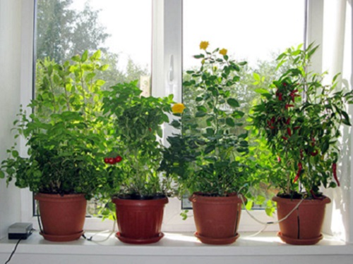 Лунный календарь комнатных растений наапрель 2021 года