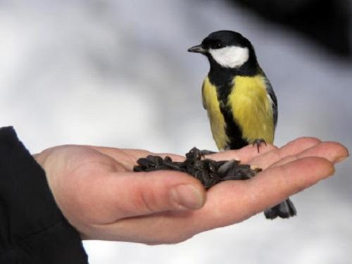 Обряды сприкормом птиц: как привлечь удачу иизобилие