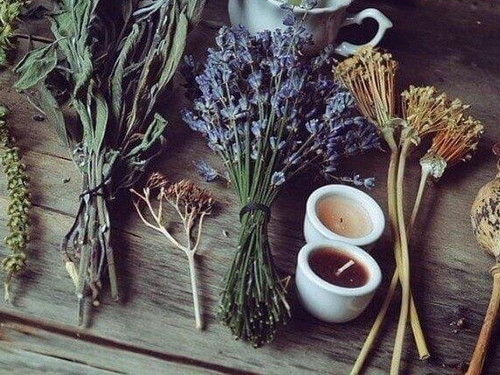 7магических трав, которые можно вырастить наподоконнике