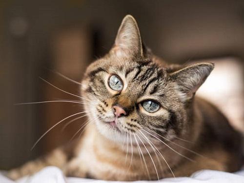 Как кошки лечат иотводят беду: факты иприметы