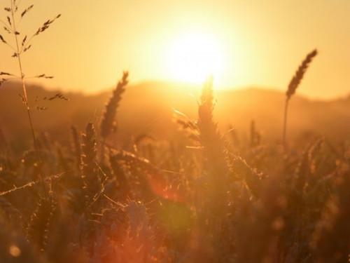 Скоро самый длинный день в2021году: летнее солнцестояние 21июня